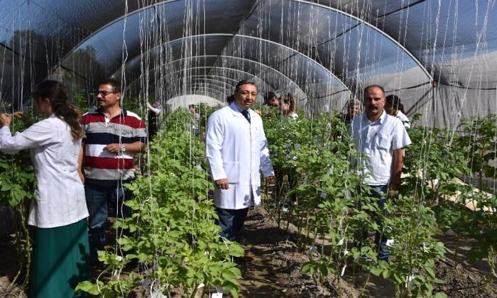 Niğde Patates Araştırma Enstitüsü 10 Çeşit Yerli Tohum Geliştirdi